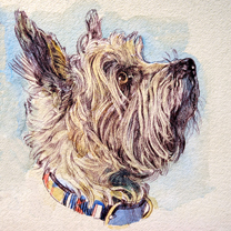Cairn Terrier by Chris Duke