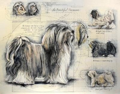 The Beautiful Havanese by Chris Duke