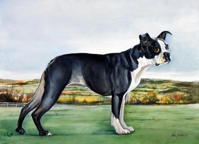 Lucy in Open Fields by Chris Duke