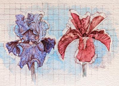 Two Iris Study - I by Chris Duke