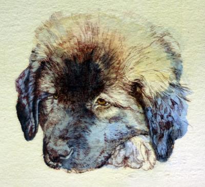 Yoshka as a Puppy by Chris Duke