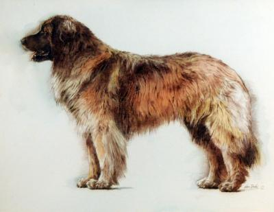 Yoshka the Leonberger by Chris Duke