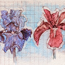 Two Iris Study - I by Chris Duke