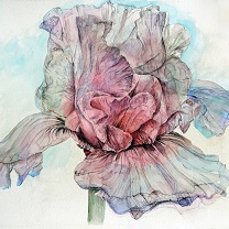 Ethereal Iris by Chris Duke
