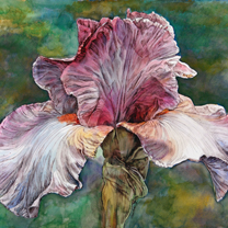 Iris on Green Field by Chris Duke