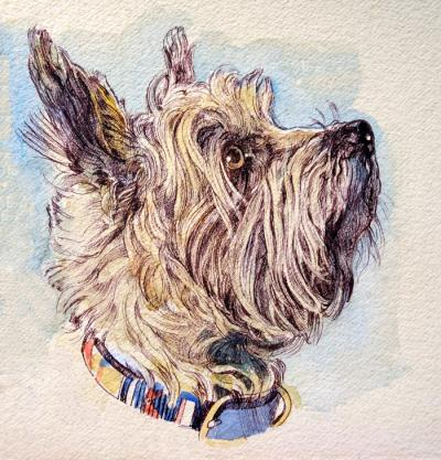 Cairn Terrier by Chris Duke