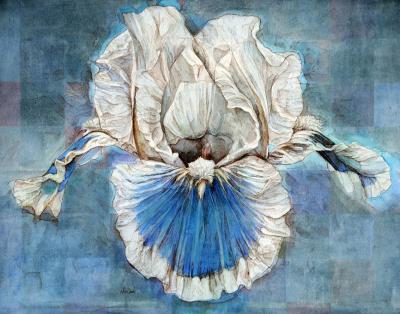 Iris on Blue by Chris Duke