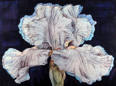 Iris at Midnight by Chris Duke