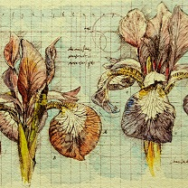 Two Iris Study - II by Chris Duke